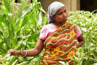 Woman creates seed banks for sustaining their own nutrition gardens resulting in more self-reliance.